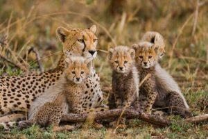 Penwell Safaris vacation
