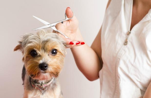 Mobile pet grooming aventura fl